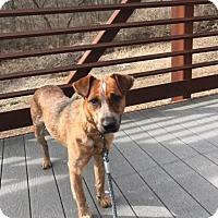 Adopt A Pet :: Ian - Manhattan, KS