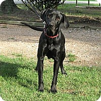 Adopt A Pet :: Jetta - Spring, TX