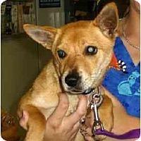 Adopt A Pet :: Shiela2 - Kingwood, TX