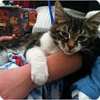 Adopt A Pet :: Nicky - Sterling Hgts, MI