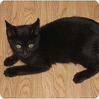 Adopt A Pet :: Hermione - Huffman, TX