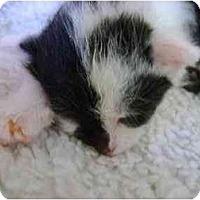 Adopt A Pet :: Half & Half - Westfield, MA