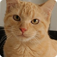 Adopt A Pet :: Molly - Savannah, MO