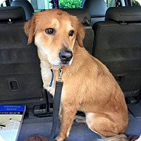 Adopt A Pet :: Chance - Ocean Ridge, FL