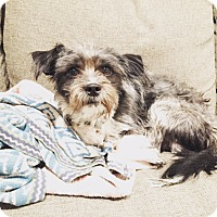 Adopt A Pet :: Bandit loves DOGS! - Los Angeles, CA