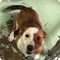 Adopt A Pet :: Kramer - Gadsden, AL