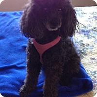 Adopt A Pet :: Emily - Dover, MA