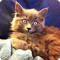 Adopt A Pet :: Dorian - Gainesville, FL