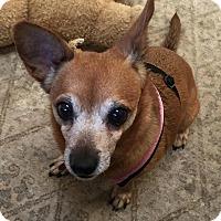 Adopt A Pet :: Gladys - Frankfort, IL