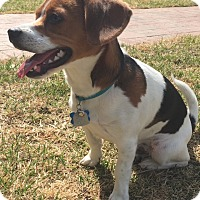 Adopt A Pet :: Fletcher - Albemarle, NC
