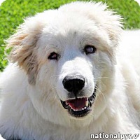 Adopt A Pet :: Finn / Special Needs - pending - Beacon, NY