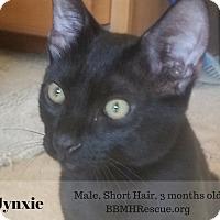 Adopt A Pet :: Jynxie - Temecula, CA