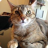 Adopt A Pet :: Khana - Oak Park, IL