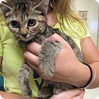 Adopt A Pet :: Raz - Windsor, VA