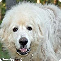 Adopt A Pet :: Casey - new! - Beacon, NY