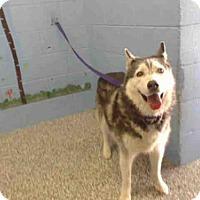 Adopt A Pet :: A496802 - San Bernardino, CA