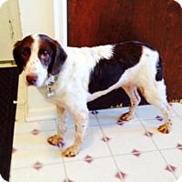 Adopt A Pet :: FL/Rhya -Adoption Pending - Atlanta, GA