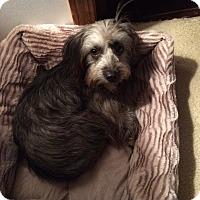 Adopt A Pet :: Maggie Mae - Jennings, OK