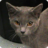Adopt A Pet :: Nala - Maynardville, TN