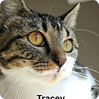 Adopt A Pet :: Tracey - Richland Hills, TX