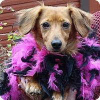 Adopt A Pet :: LILYANNE - Portland, OR