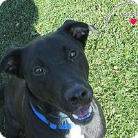 Adopt A Pet :: Corbin - Sidney, OH