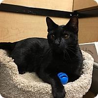 Adopt A Pet :: Clementine - Riverside, CA