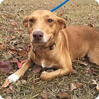 Adopt A Pet :: Sadie Belle - East Dover, VT