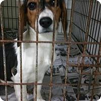 Adopt A Pet :: 17-01-0100 Katelyn - Dallas, GA