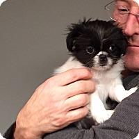Adopt A Pet :: Nara - Harrison, NY