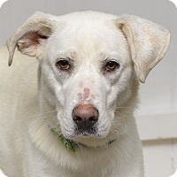 Adopt A Pet :: Opal - Westfield, NY