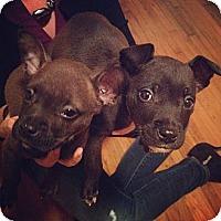 Adopt A Pet :: Squanto - Orlando, FL