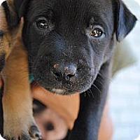 Adopt A Pet :: Widmer - Orlando, FL