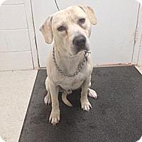 Adopt A Pet :: Bond - Lancaster, VA