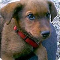Adopt A Pet :: Fletcher - dewey, AZ