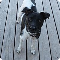 Adopt A Pet :: Duke - Fountain, CO
