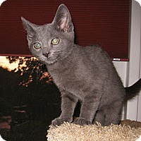Adopt A Pet :: Blue - Colmar, PA