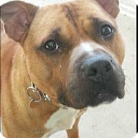 Adopt A Pet :: Garrin - Elderton, PA