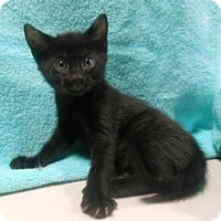 Adopt A Pet :: Natash - Reston, VA