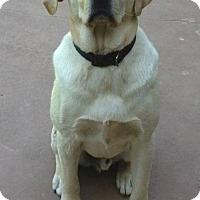 Adopt A Pet :: Jake - Huntsville, AL