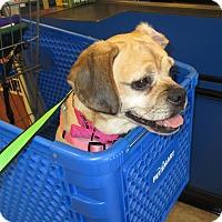 Adopt A Pet :: Frankie - Orange Park, FL