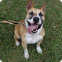 Adopt A Pet :: Taz - Jupiter, FL