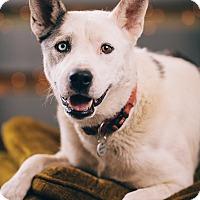 Adopt A Pet :: Bentley - Portland, OR