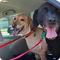 Adopt A Pet :: Chloe & Cora - Charleston, SC