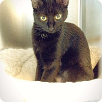 Adopt A Pet :: Necie - Chicago, IL