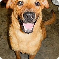 Adopt A Pet :: *Jackson - PENDING - Westport, CT