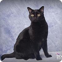 Adopt A Pet :: OY - Omaha, NE