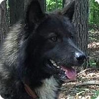 Adopt A Pet :: Yucon - Brattleboro, VT