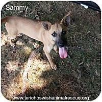 Adopt A Pet :: Sammy - Burlington, NJ