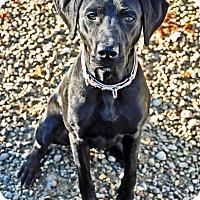 Adopt A Pet :: Rusa - Pleasant Plain, OH
